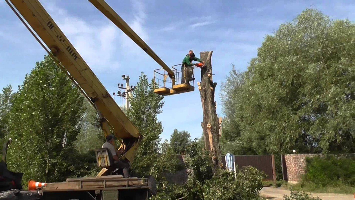 Спил деревьев в Челябинске
